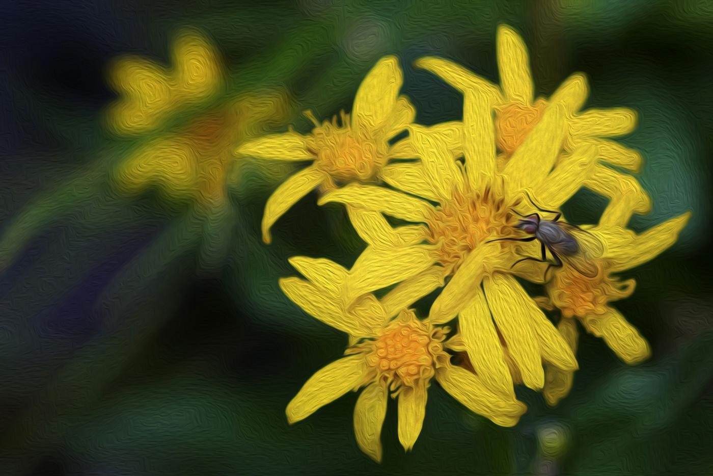 黄花和果蝇之印象派篇_图1-1