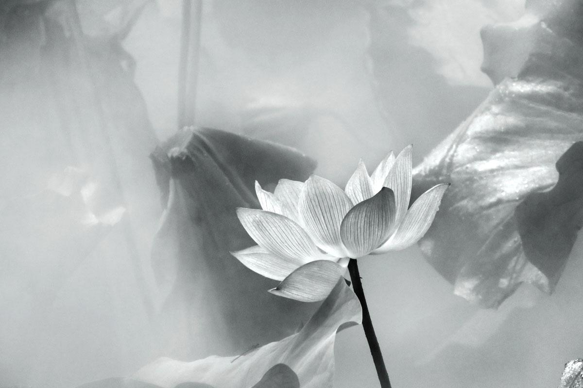 【达威】轻描淡写影风荷_图2-8