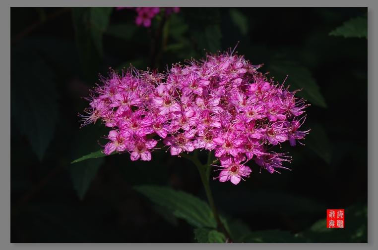 蜂花蜜月--2