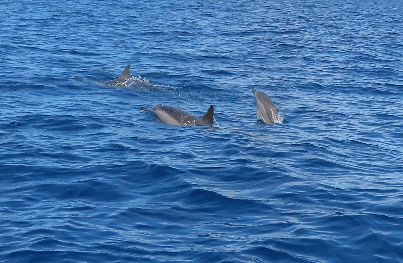 夏威夷精彩旅游节目:与海豚同