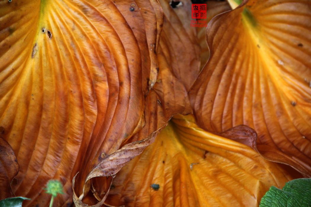 【攝影蟲】紐約中央公園紅葉舞秋風_图1-5