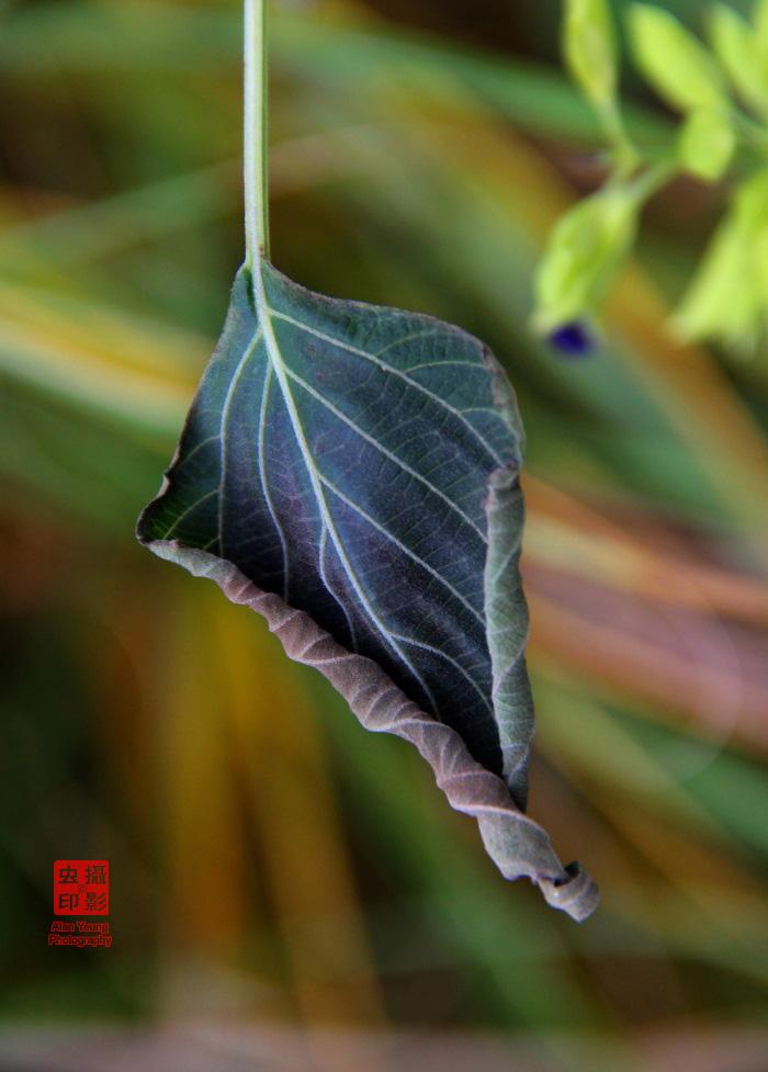 【攝影蟲】紐約中央公園紅葉舞秋風_图1-6