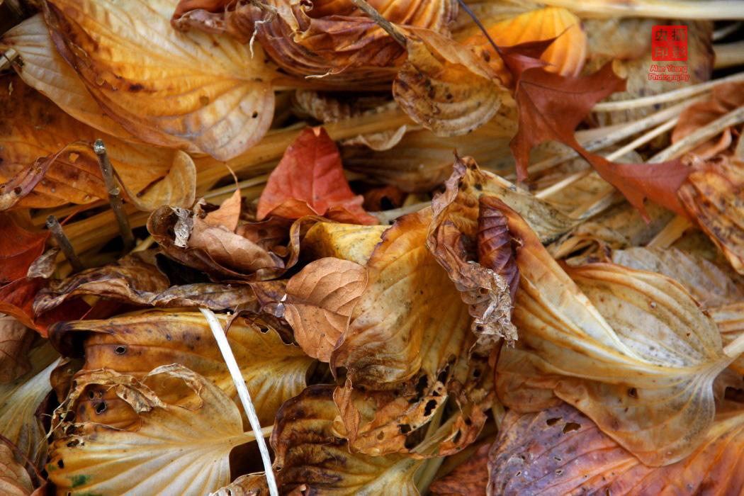 【攝影蟲】紐約中央公園紅葉舞秋風_图1-9