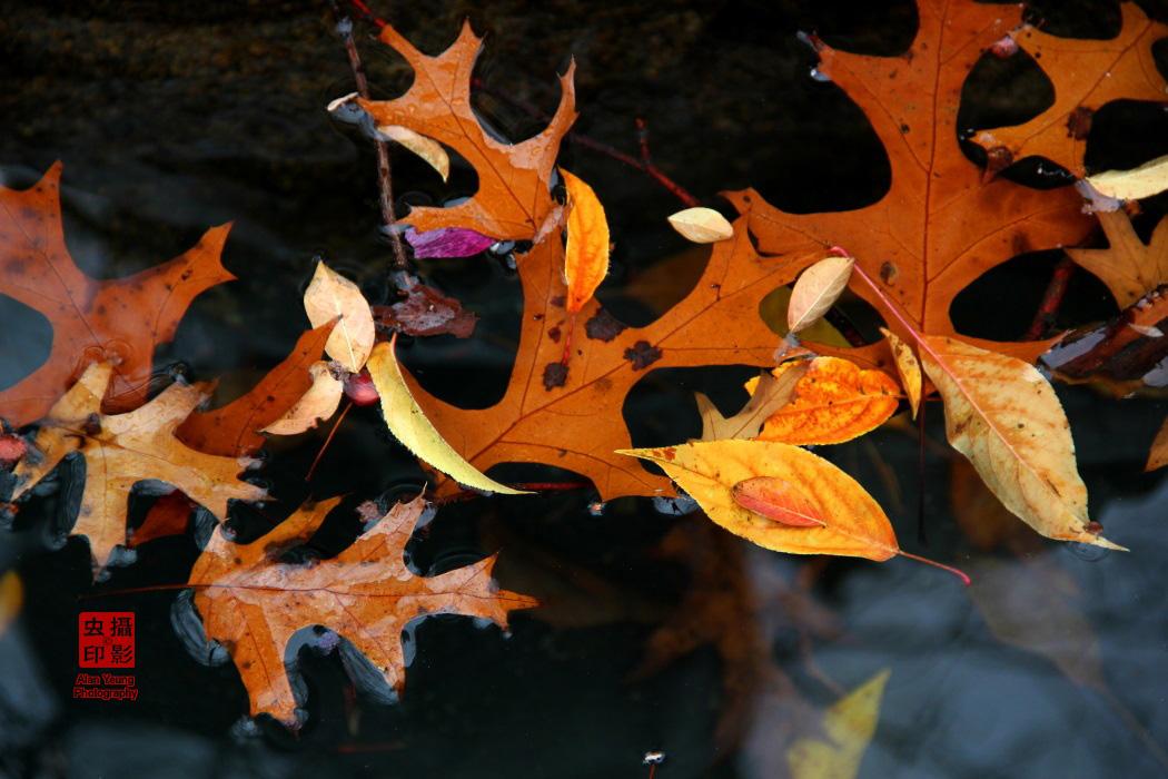 【攝影蟲】紐約中央公園紅葉舞秋風_图1-2
