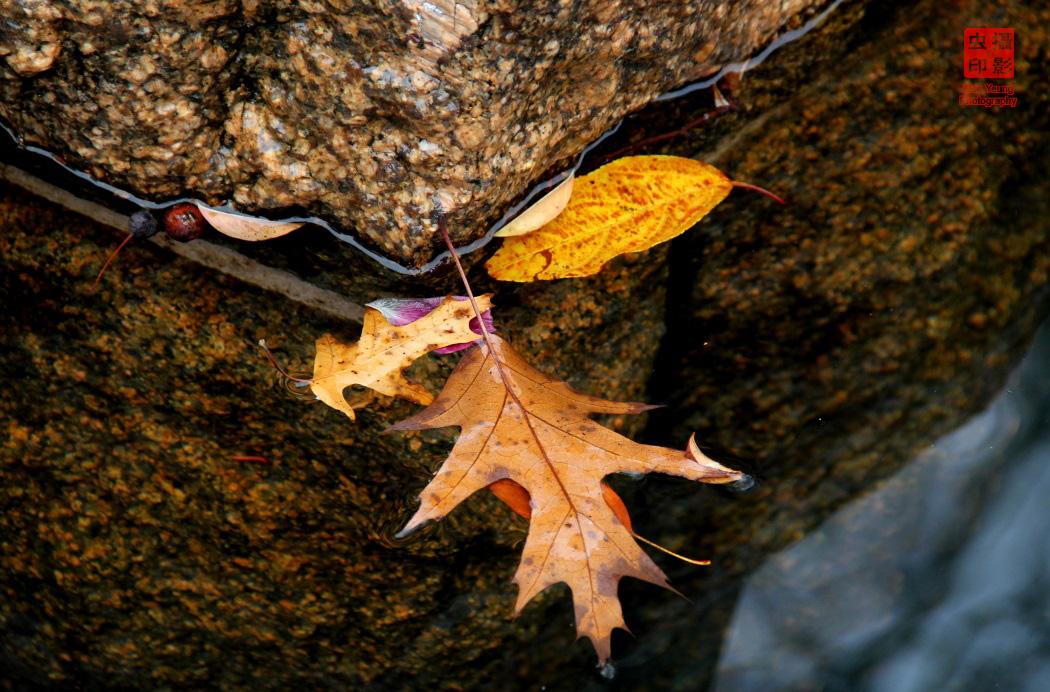 【攝影蟲】紐約中央公園紅葉舞秋風_图1-3