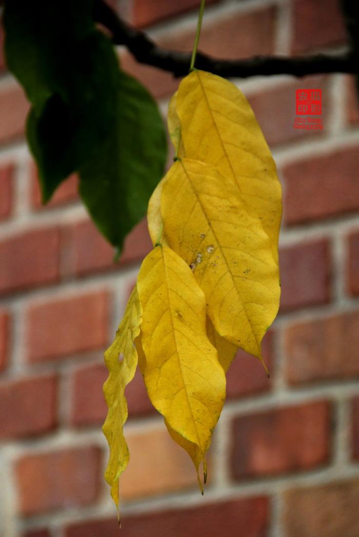 【攝影蟲】紐約中央公園紅葉舞秋風_图1-10