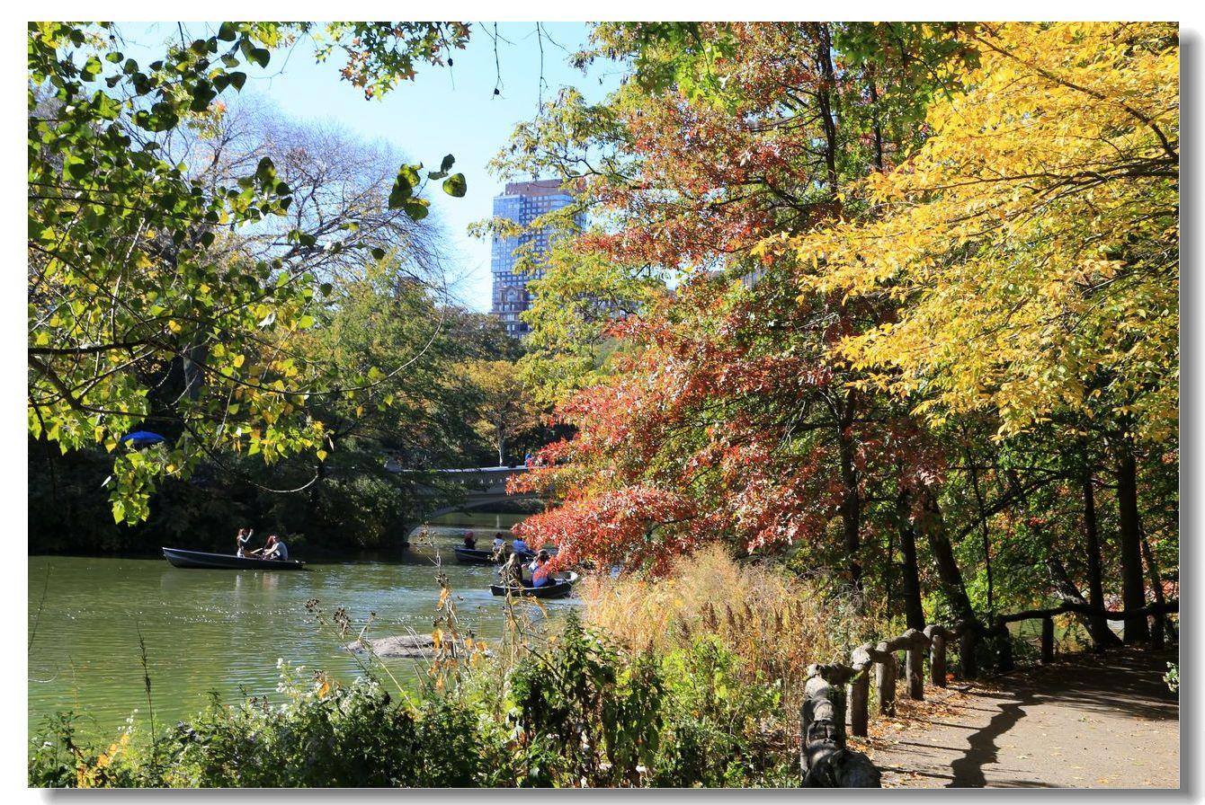 中央公园秋色一组_图1-13