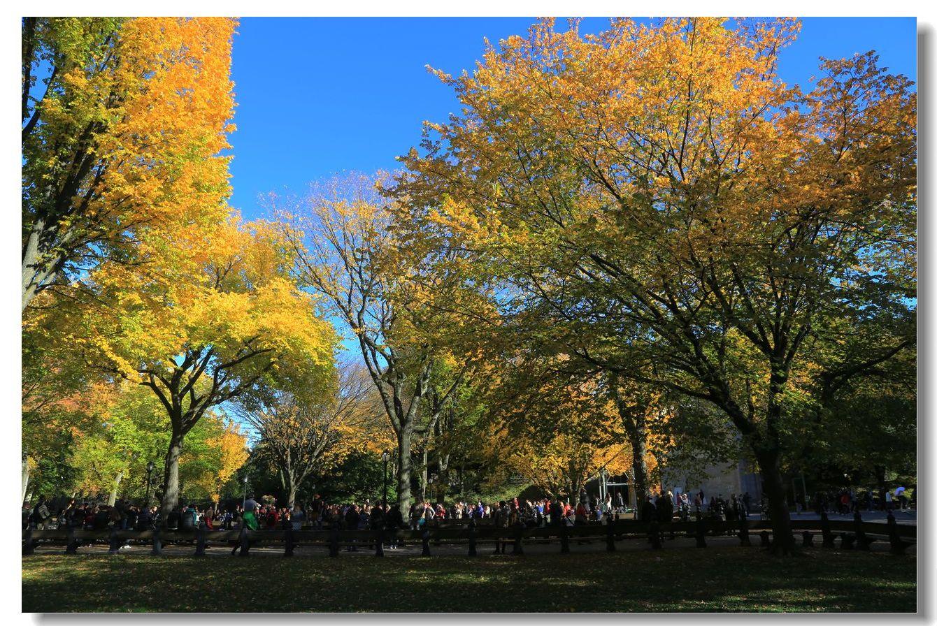 中央公园秋色一组_图1-17
