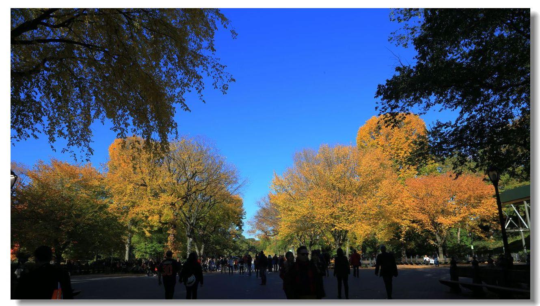 中央公园秋色一组_图1-20