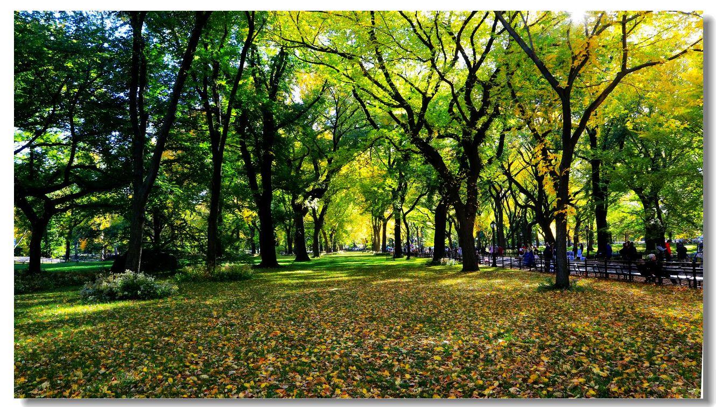 中央公园秋色一组_图1-21