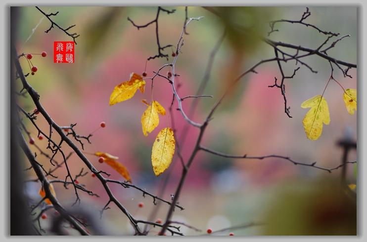 秋天小品--2_图1-1