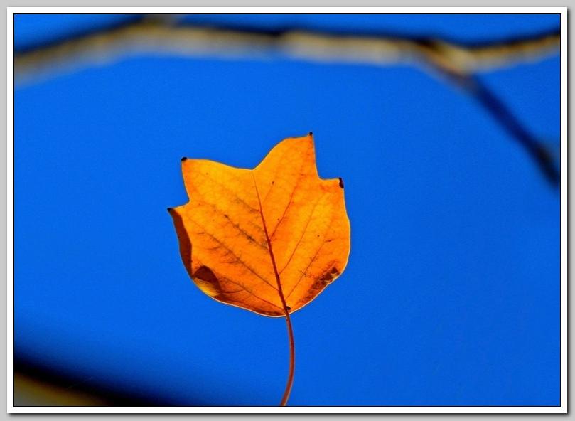 绿叶丛中找秋景