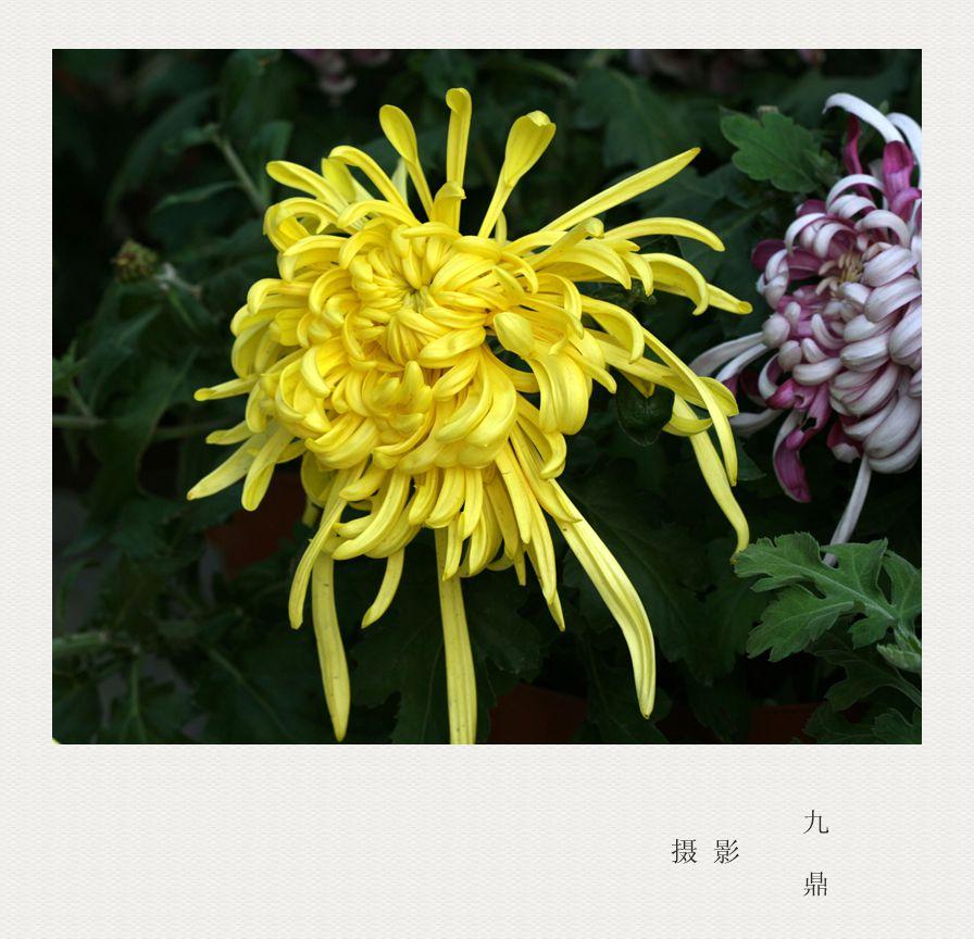 摄影   小 花_图1-2