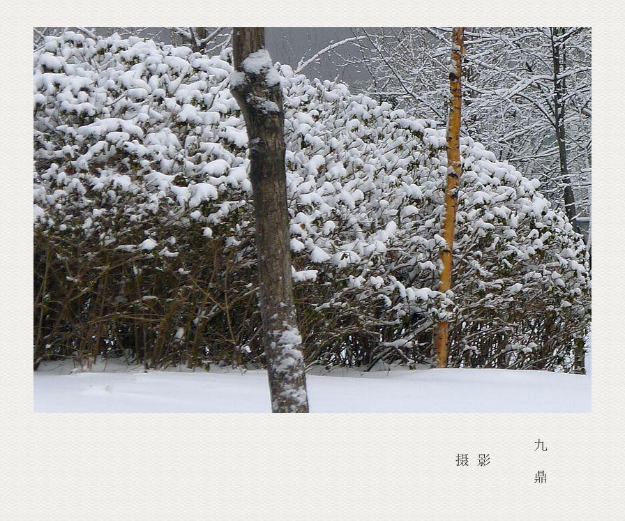 摄影  雪  后_图1-1