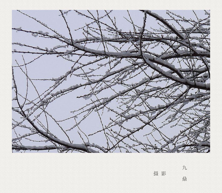 摄影  雪  后_图1-2