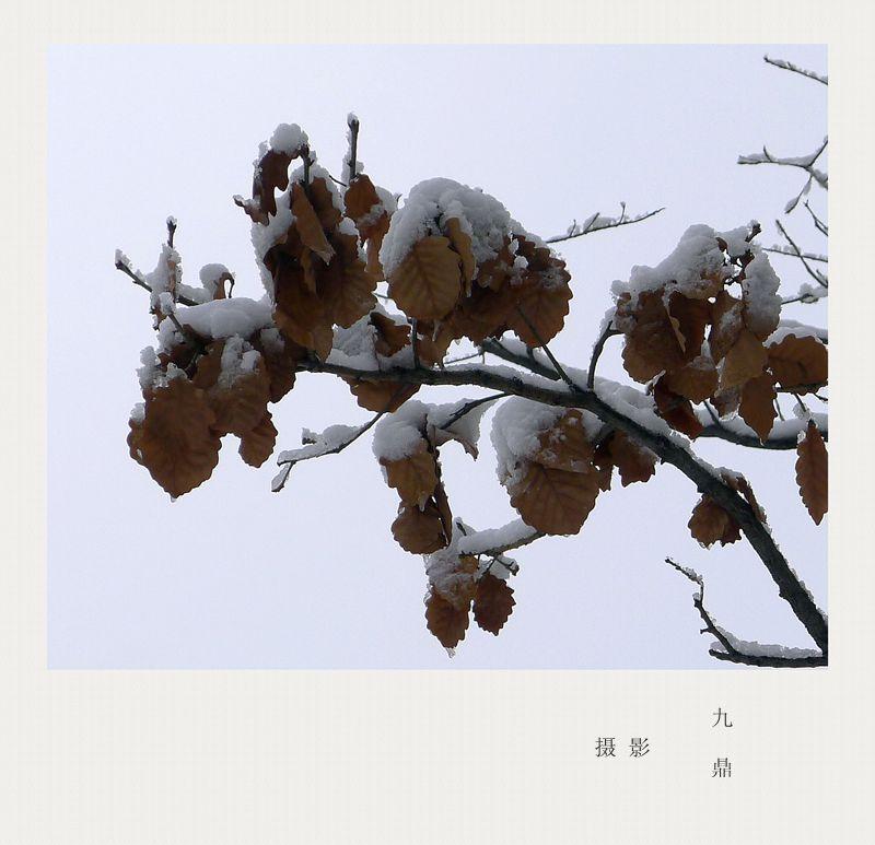 摄影  雪  后_图1-5