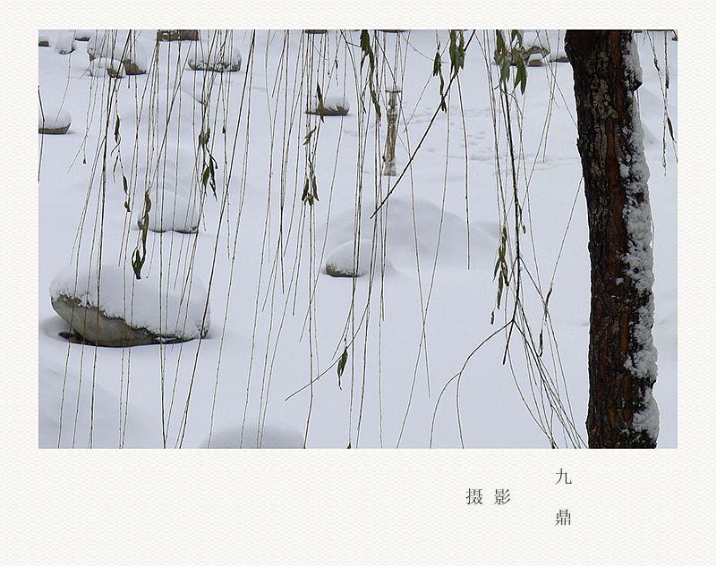 摄影  雪  后_图1-6