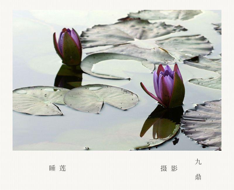 摄影    睡 莲_图1-2