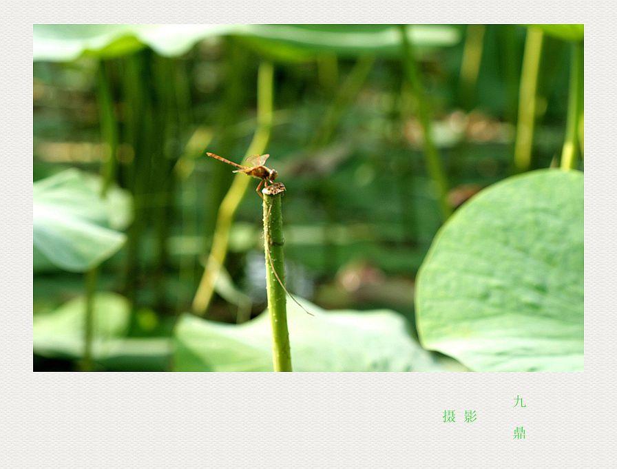 摄影  荷  花_图1-3