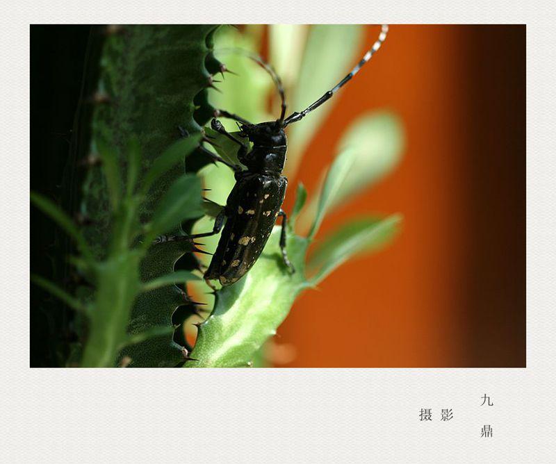 摄影  水 牛_图1-1