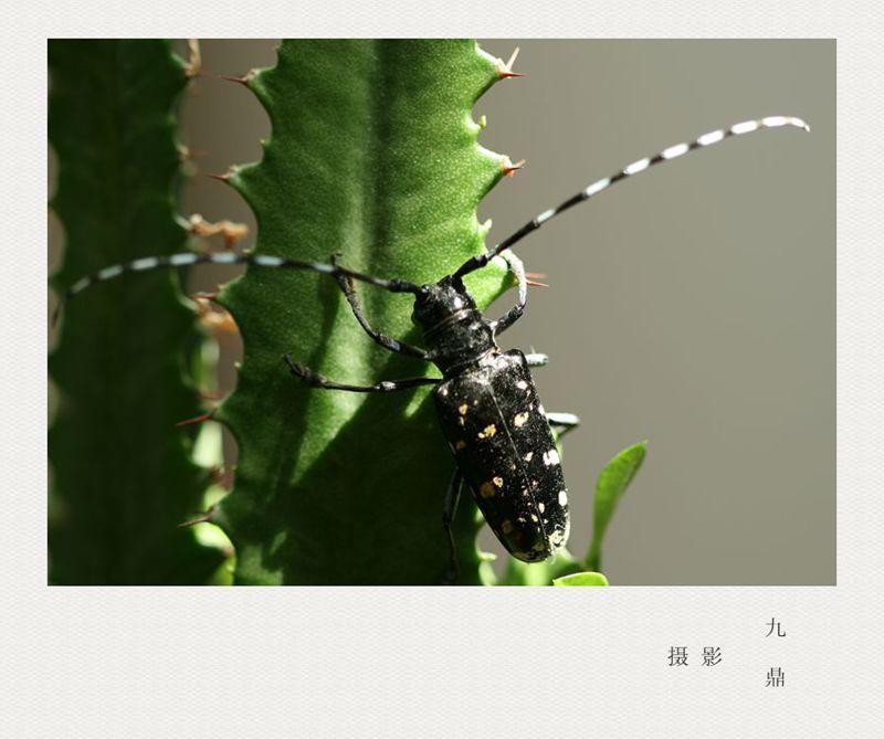 摄影  水 牛_图1-2