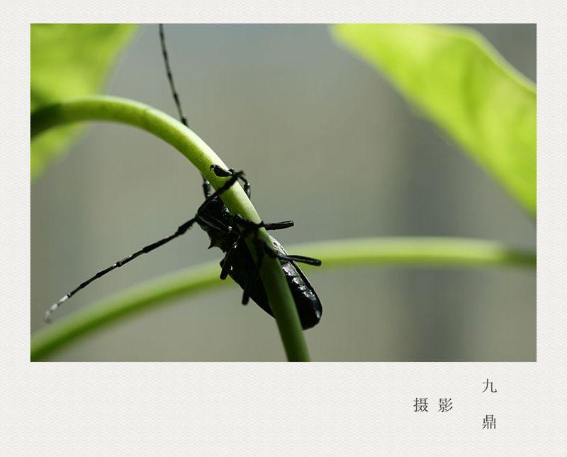 摄影  水 牛_图1-4