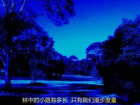 【四格照片】林中的小路