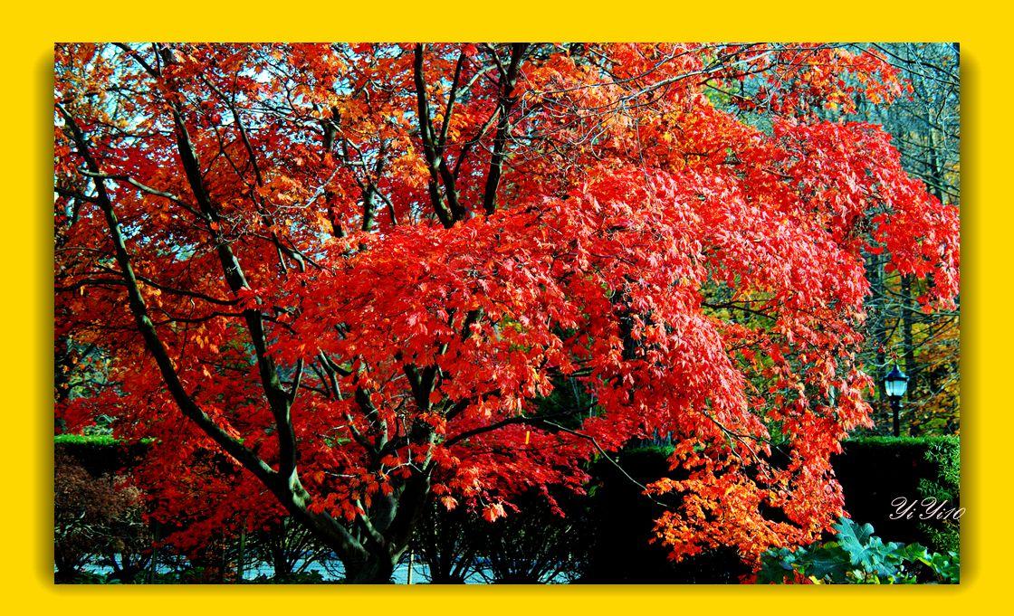 【原创】秋树,秋花,秋叶(摄影)_图1-6
