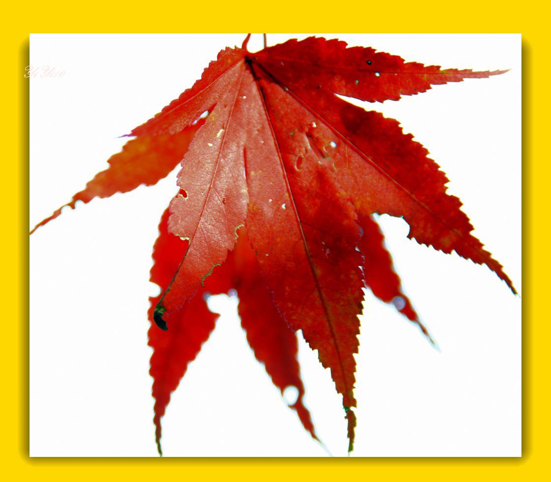 【原创】秋树,秋花,秋叶(摄影)_图1-8
