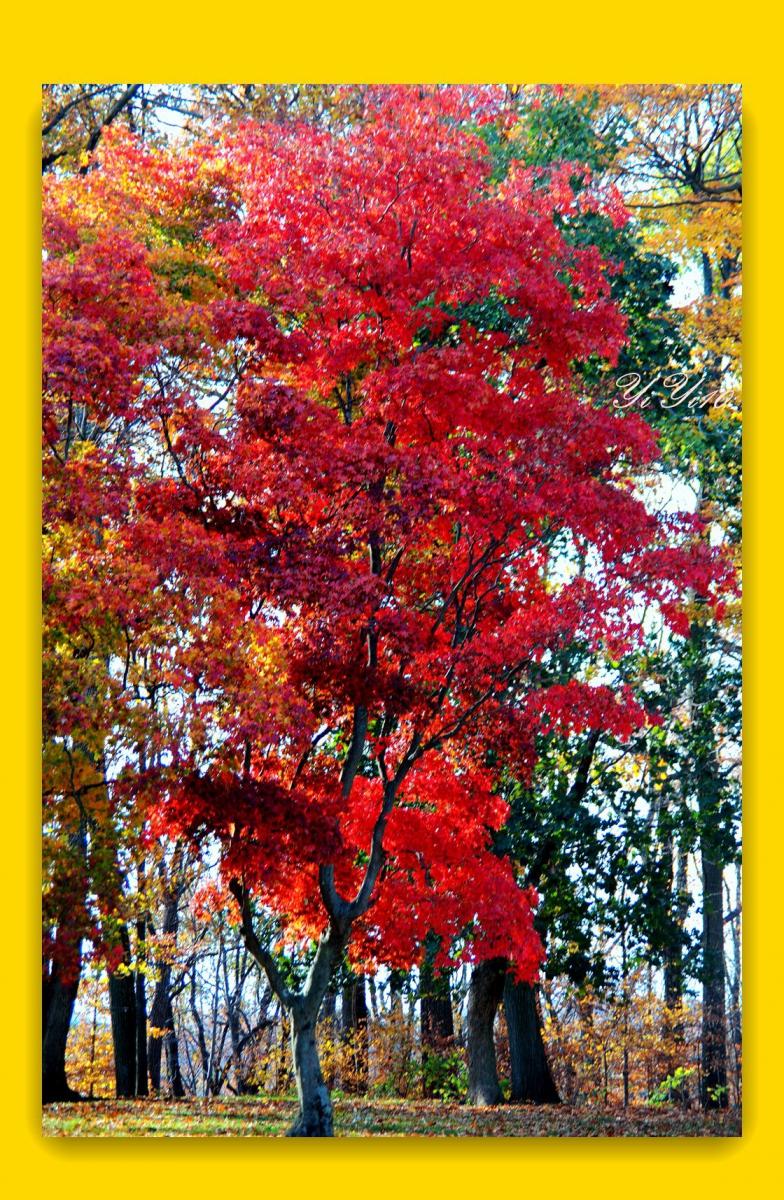 【原创】秋树,秋花,秋叶(摄影)_图1-2
