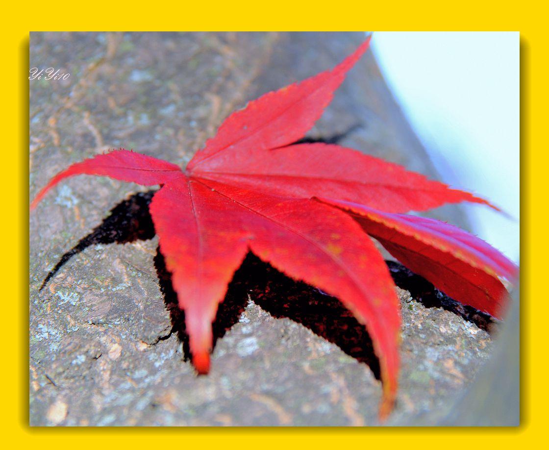 【原创】秋树,秋花,秋叶(摄影)_图1-9