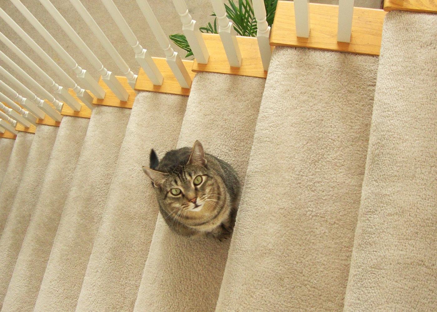 【晓鸣摄影】安逸的小猫猫_图1-3