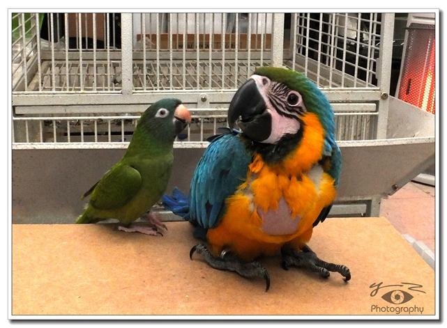 【相机人生】我的几只小鸟(47