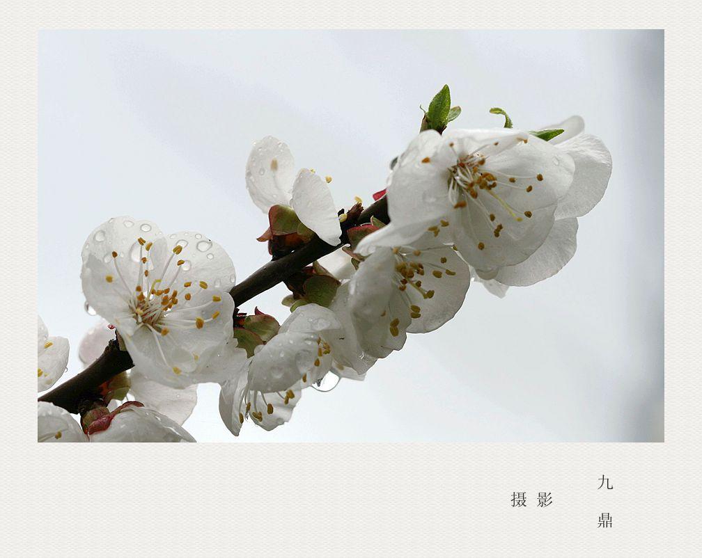 摄影  忽如一夜春风来_图1-1