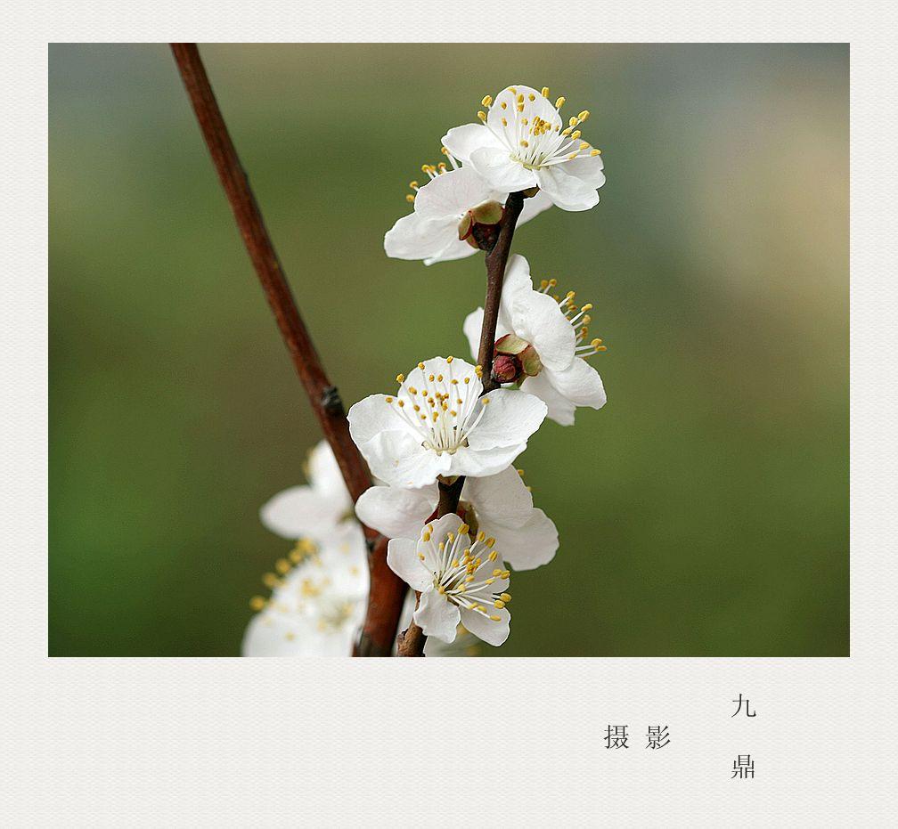 摄影  忽如一夜春风来_图1-3