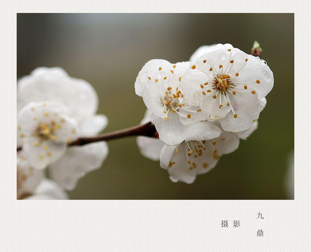 摄影  忽如一夜春风来_图1-4