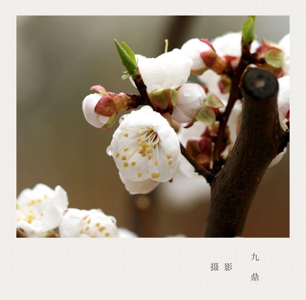 摄影  忽如一夜春风来_图1-5