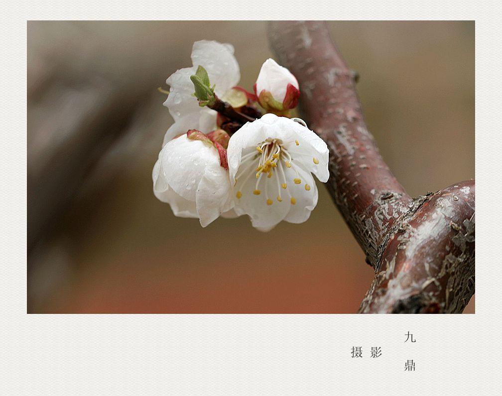 摄影  忽如一夜春风来_图1-7