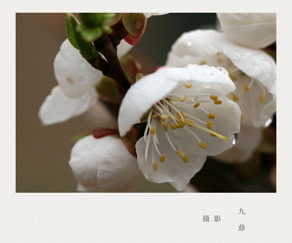 摄影  忽如一夜春风来_图1-8