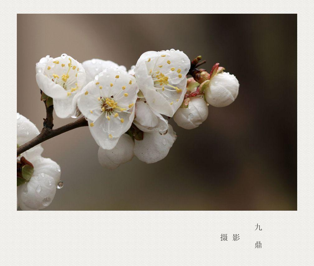 摄影  忽如一夜春风来_图1-9