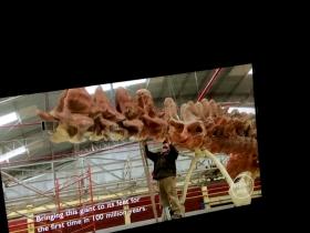 参观最大恐龙化石160115