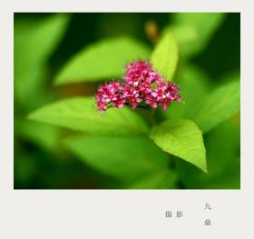 摄影  树 叶_图1-13