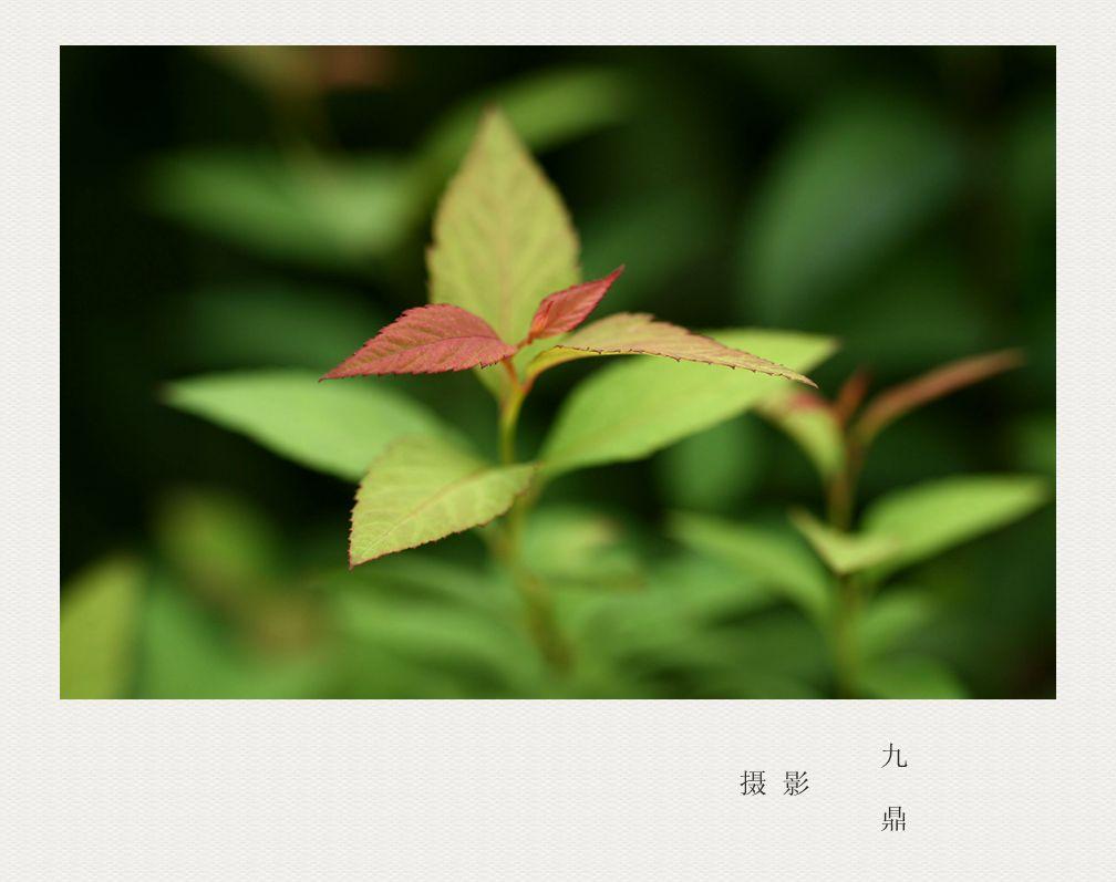 摄影  树 叶_图1-2