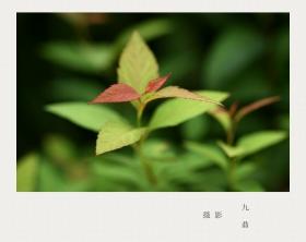 摄影  树 叶_图1-14