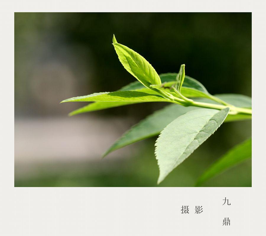 摄影  树 叶_图1-5