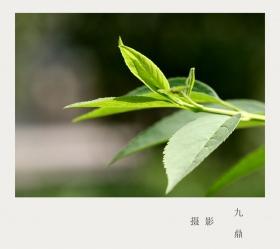 摄影  树 叶_图1-16