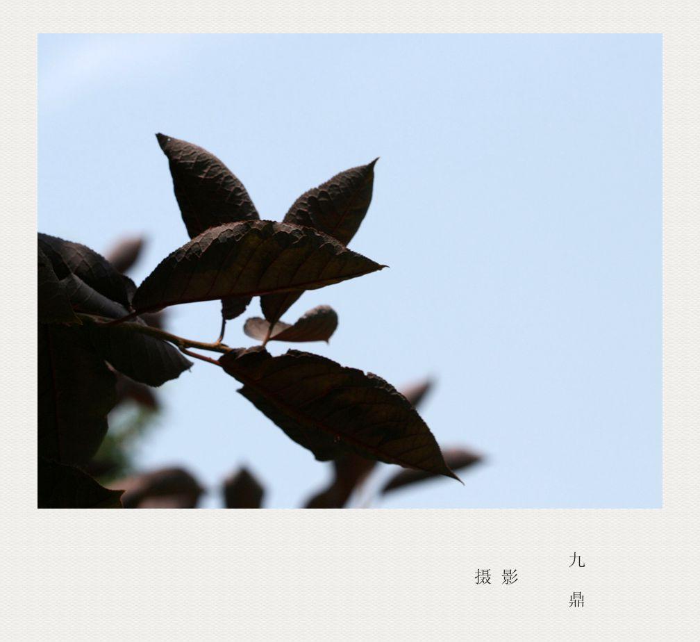 摄影  树 叶_图1-7