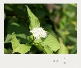 摄影  树 叶_图1-19