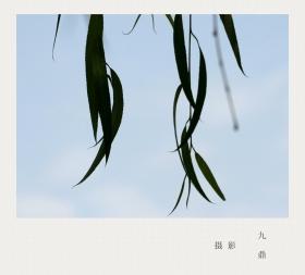 摄影  树 叶_图1-20