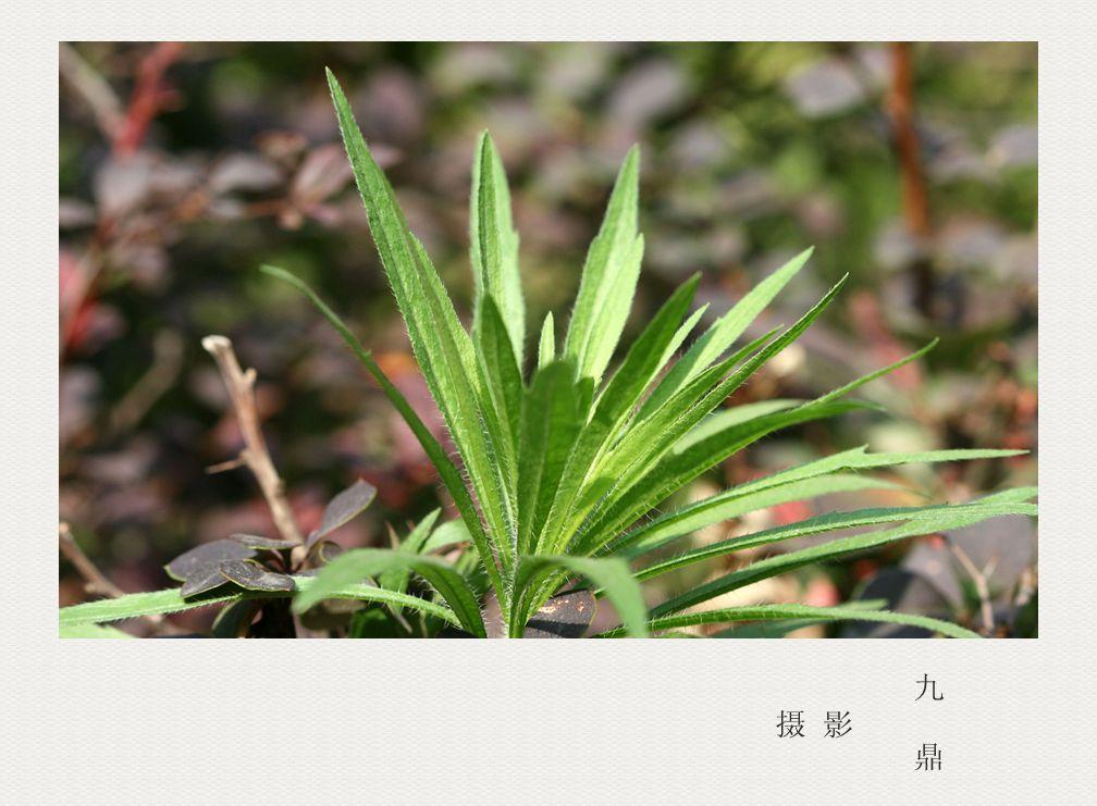 摄影  树 叶_图1-11
